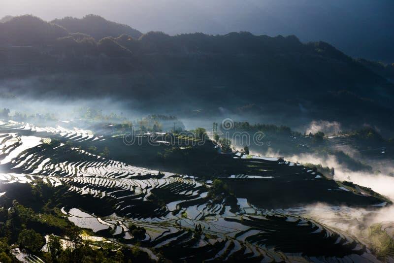 Terrasses et brouillard de riz photos libres de droits