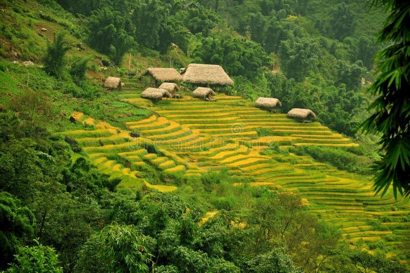 Terrasses et cottage de riz dans Sapa, Vietnam images stock