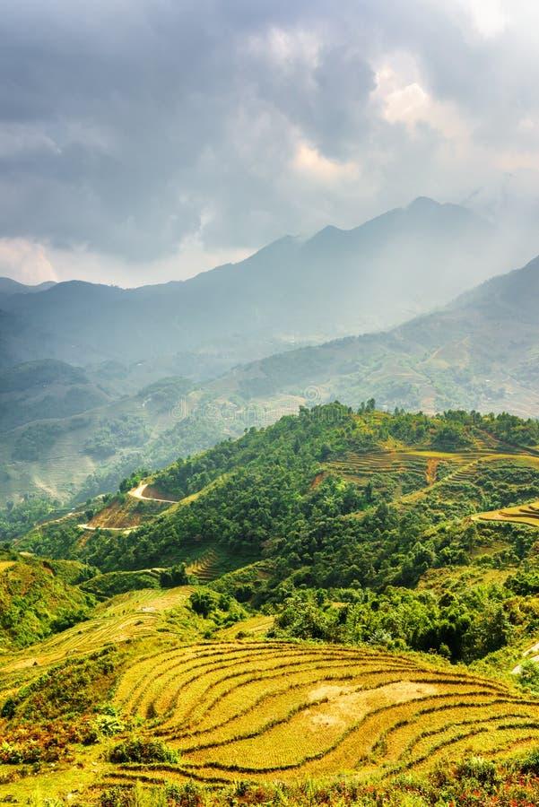 Terrasses vertes ensoleill?es de riz aux montagnes de la PA de SA, Vietnam image stock