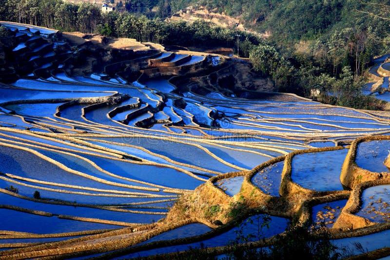 Terrassfält i västra Kina arkivfoto