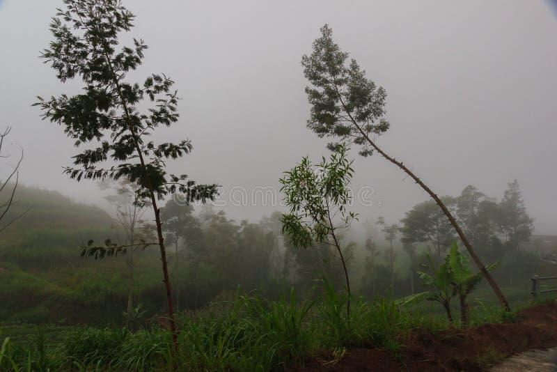 Terrassodling i berg ny gräsgreen arkivbild