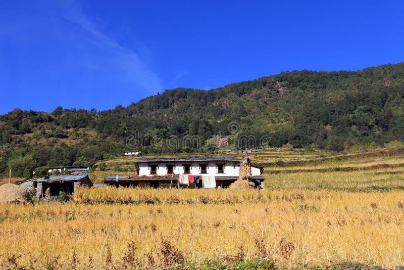 Terrassris Paddy Field, Nepal fotografering för bildbyråer
