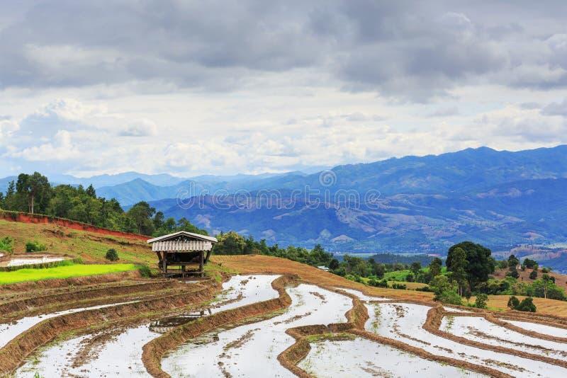 Terrasvormig Paddy Field in mae-Jam Dorp, Chaingmai-Provincie, T stock afbeeldingen