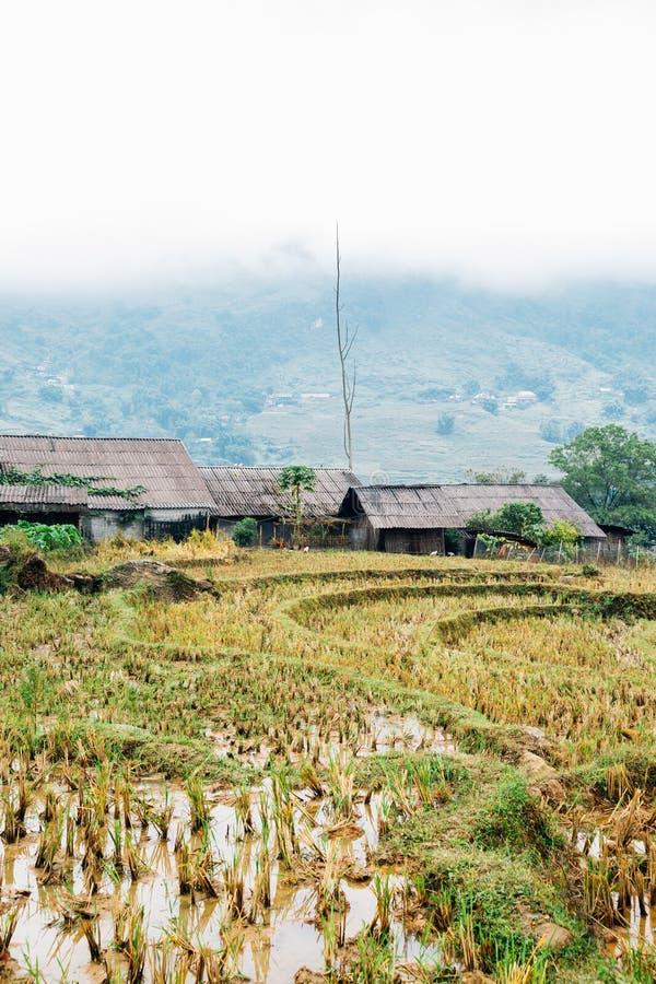 Terrasvormig padieveld en traditioneel huis in Lao Chai, Sapa, Vietnam stock foto's