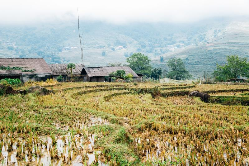 Terrasvormig padieveld en traditioneel huis in Lao Chai, Sapa, Vietnam royalty-vrije stock foto's