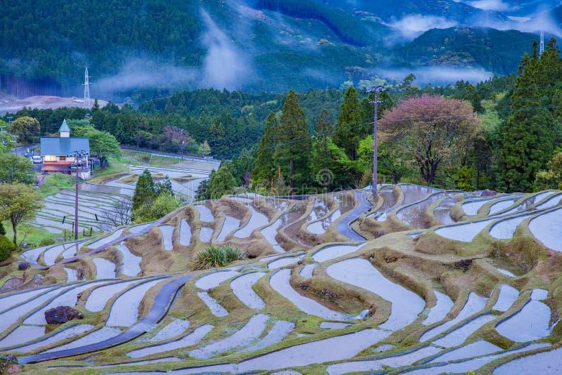 Terrasvormig padieveld in Maruyama Senmaida, Kumano-Stad, Mie Prefecture royalty-vrije stock foto's