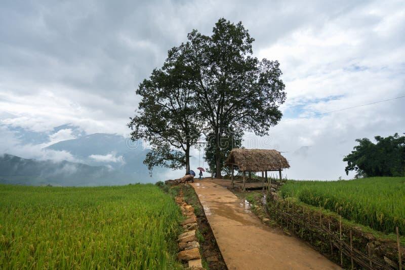 Terrasvormig padieveld met groot boomlandschap van Y Ty, het district van Knuppelxat, Lao Cai, Noord-Vietnam stock afbeelding
