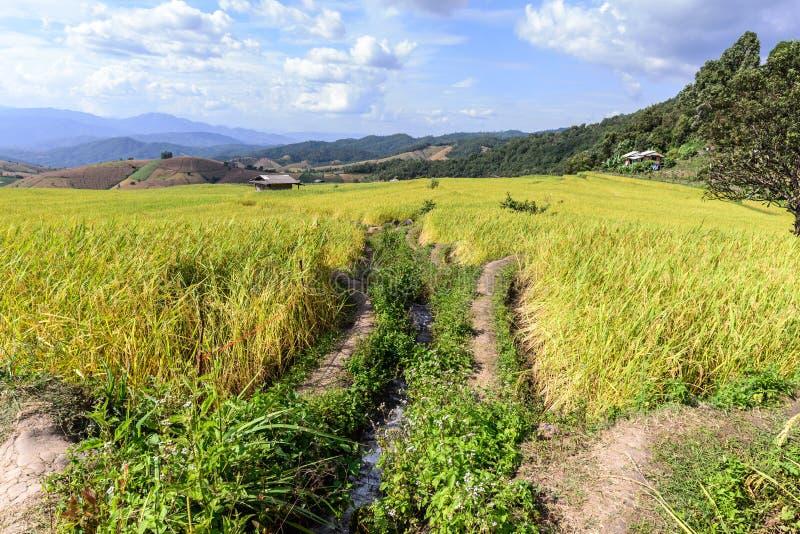 Terrasvormig padieveld met irrigatiekanaal bij Verbodspa Bong Piang, Chiang Mai in Thailand stock foto