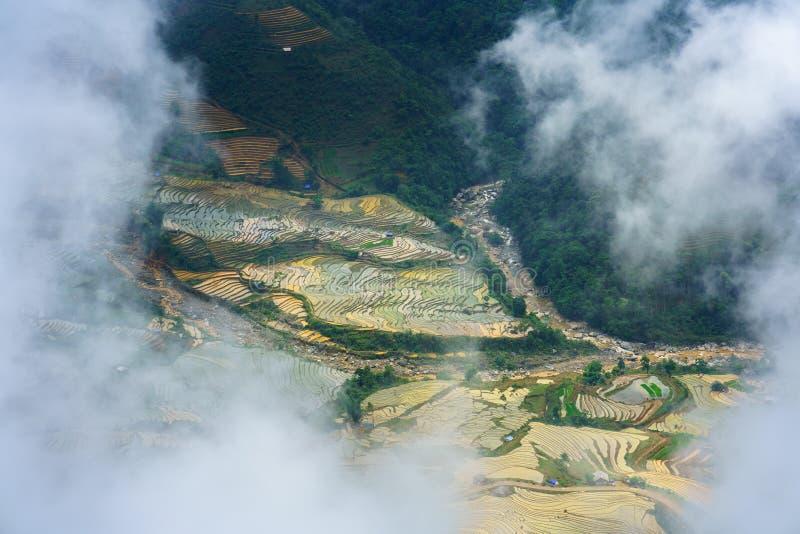 Terrasvormig padieveld onder wolken in waterseizoen, de tijd alvorens te beginnen rijst in Y Ty, Lao Cai-provincie, Vietnam kweek stock foto's