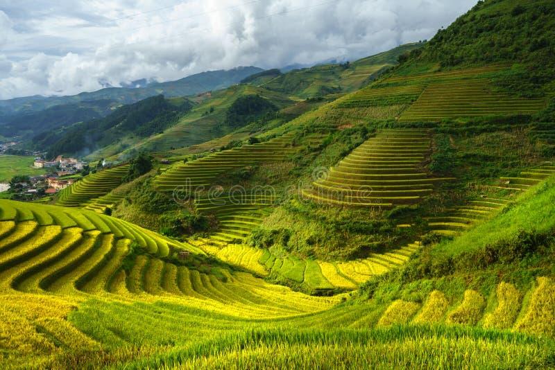 Terrasvormig padieveld in oogstseizoen in Mu Cang Chai, Vietnam royalty-vrije stock foto