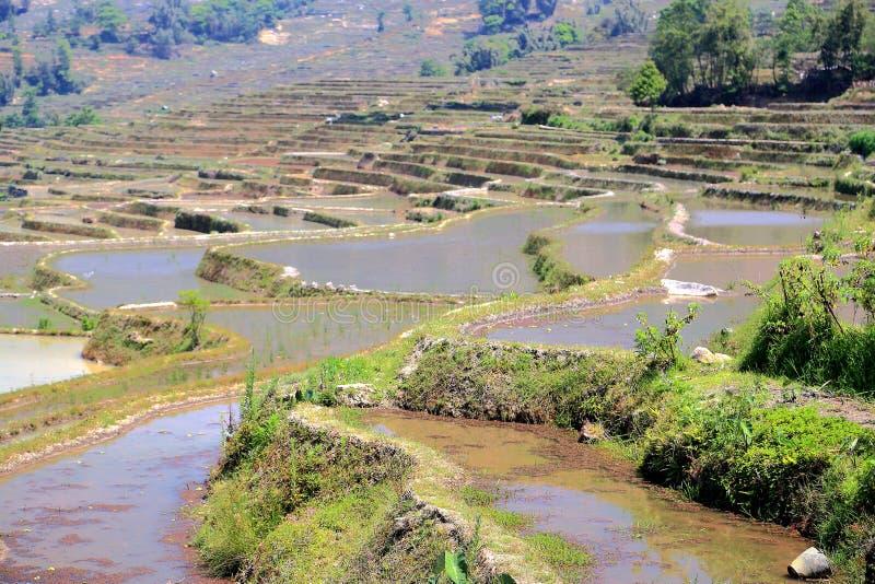 Terrasvormig padieveld van de etnische mensen van Hani in Yuanyang, Yunnan-provincie, China royalty-vrije stock afbeelding