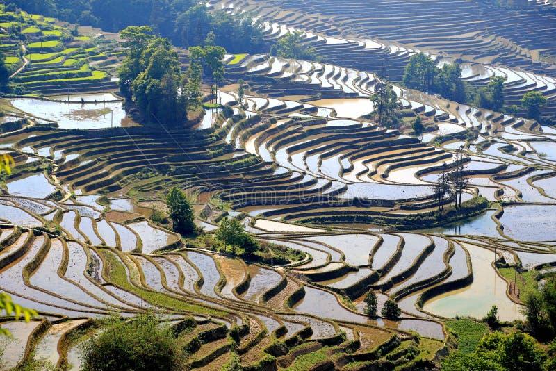 Terrasvormig padieveld van de etnische mensen van Hani in Yuanyang, Yunnan-provincie, China stock foto