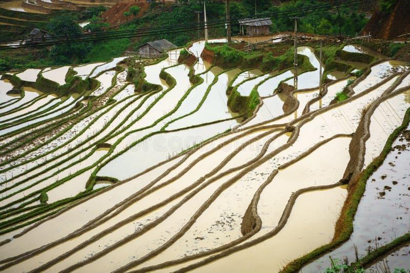 Terrasvormig padieveld in waterseizoen, de tijd alvorens te beginnen rijst in Y Ty, Lao Cai-provincie, Vietnam kweekt royalty-vrije stock foto's