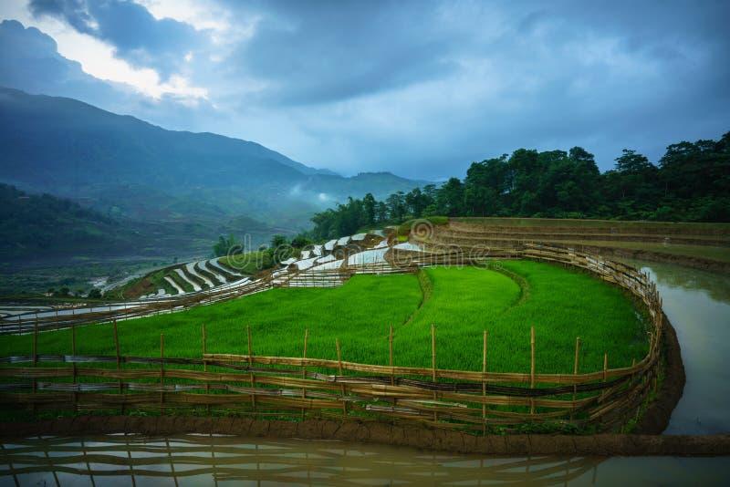 Terrasvormig padieveld in waterseizoen, de tijd alvorens te beginnen rijst in Y Ty, Lao Cai-provincie, Vietnam kweekt stock fotografie