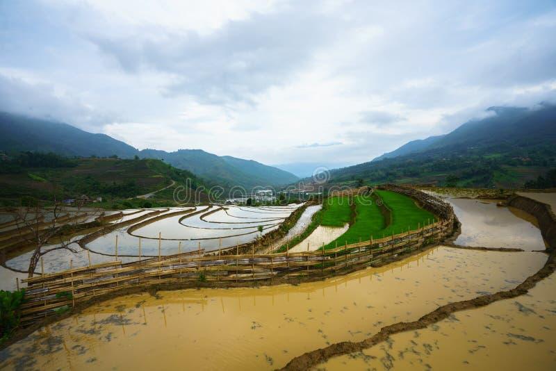 Terrasvormig padieveld in waterseizoen, de tijd alvorens te beginnen rijst in Y Ty, Lao Cai-provincie, Vietnam kweekt stock afbeelding