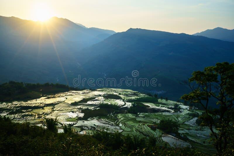 Terrasvormig padieveld in waterseizoen door zonsondergangperiode, de tijd alvorens te beginnen rijst in Y Ty, Lao Cai-provincie,  royalty-vrije stock foto's