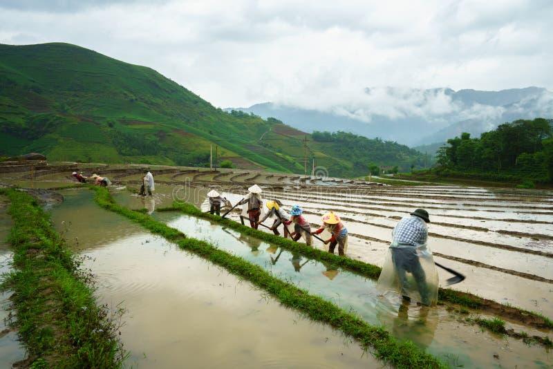 Terrasvormig padieveld in waterseizoen, met landbouwers die aan het gebied in Y Ty, Lao Cai-provincie, Vietnam werken royalty-vrije stock foto's