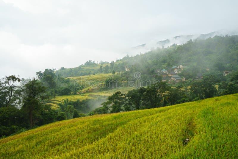 Terrasvormig padieveldlandschap in het oogsten van seizoen met lage wolken in Y Ty, het district van Knuppelxat, Lao Cai, Noord-V royalty-vrije stock fotografie