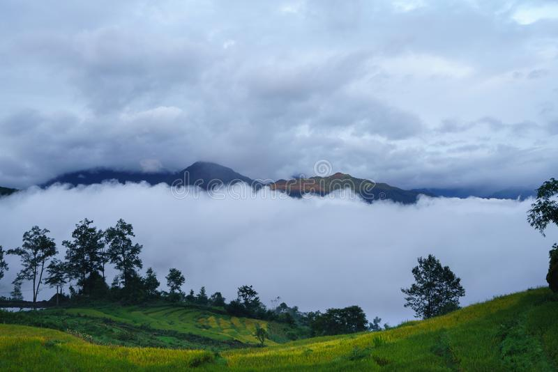 Terrasvormig padieveldlandschap in het oogsten van seizoen met lage wolken in Y Ty, het district van Knuppelxat, Lao Cai, Noord-V royalty-vrije stock foto's