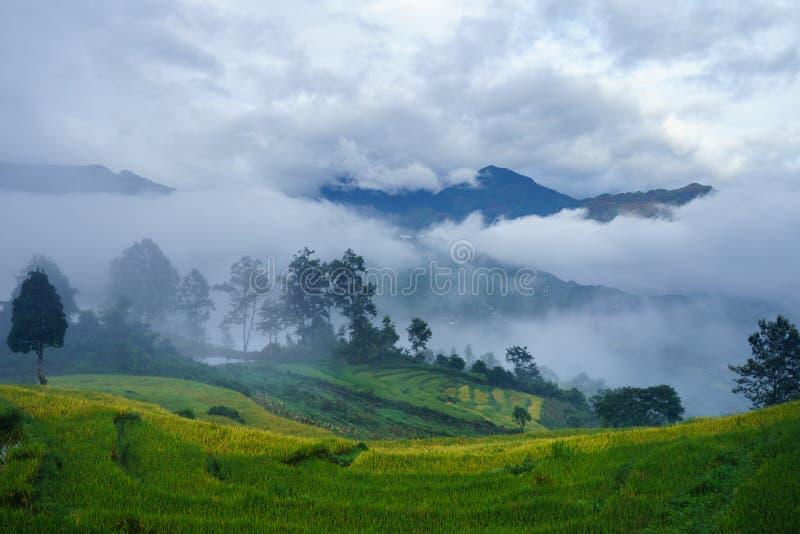 Terrasvormig padieveldlandschap in het oogsten van seizoen met lage wolken in Y Ty, het district van Knuppelxat, Lao Cai, Noord-V stock foto