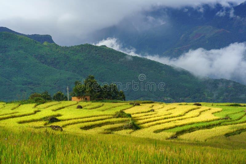 Terrasvormig padieveldlandschap in het oogsten van seizoen met lage wolken in Y Ty, het district van Knuppelxat, Lao Cai, Noord-V stock fotografie
