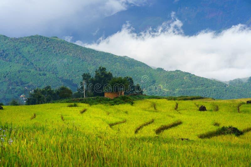 Terrasvormig padieveldlandschap in het oogsten van seizoen met lage wolken in Y Ty, het district van Knuppelxat, Lao Cai, Noord-V royalty-vrije stock afbeeldingen