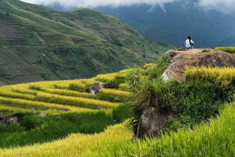 Terrasvormig padieveldlandschap in het oogsten van seizoen in Y Ty, het district van Knuppelxat, Lao Cai, Noord-Vietnam stock foto's