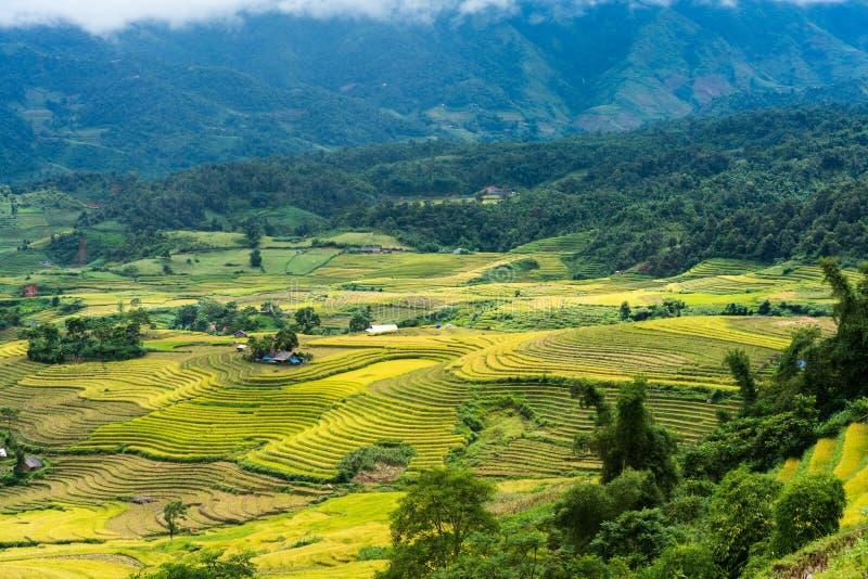 Terrasvormig padieveldlandschap in het oogsten van seizoen in Y Ty, het district van Knuppelxat, Lao Cai, Noord-Vietnam stock afbeelding