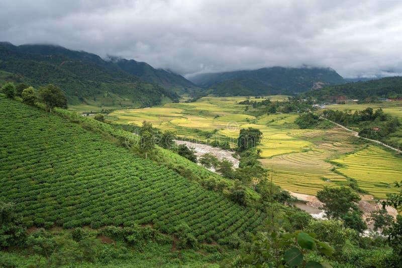 Terrasvormig padieveldlandschap in het oogsten van seizoen in Y Ty, het district van Knuppelxat, Lao Cai, Noord-Vietnam stock fotografie