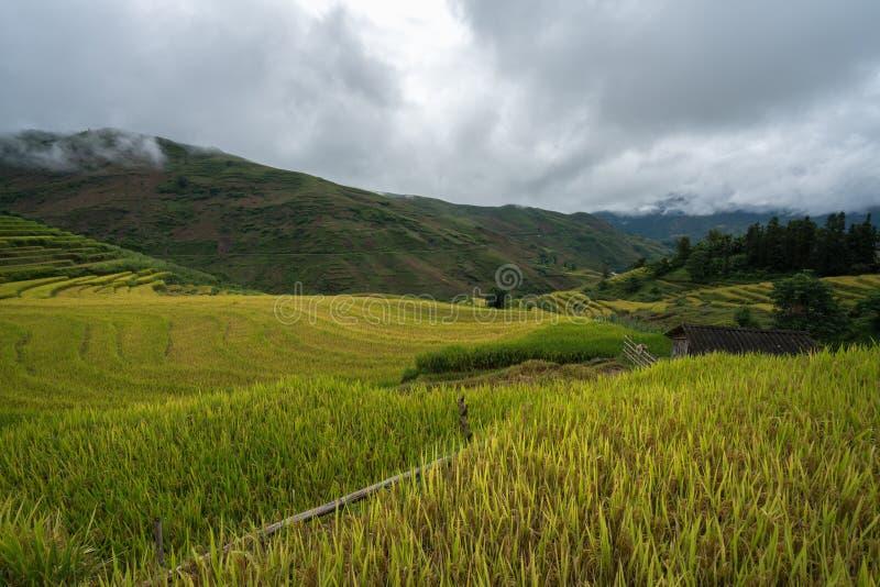 Terrasvormig padieveldlandschap in het oogsten van seizoen in Y Ty, het district van Knuppelxat, Lao Cai, Noord-Vietnam royalty-vrije stock afbeelding