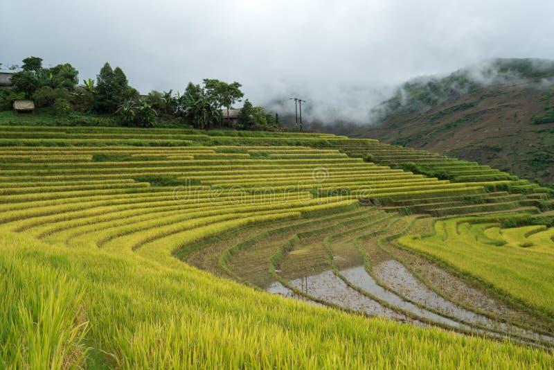 Terrasvormig padieveldlandschap in het oogsten van seizoen in Y Ty, het district van Knuppelxat, Lao Cai, Noord-Vietnam royalty-vrije stock foto's
