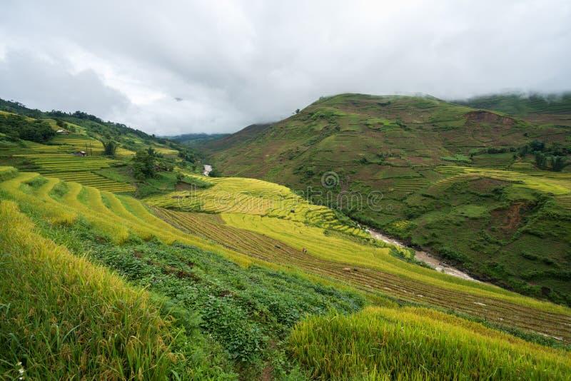 Terrasvormig padieveldlandschap in het oogsten van seizoen in Y Ty, het district van Knuppelxat, Lao Cai, Noord-Vietnam stock foto