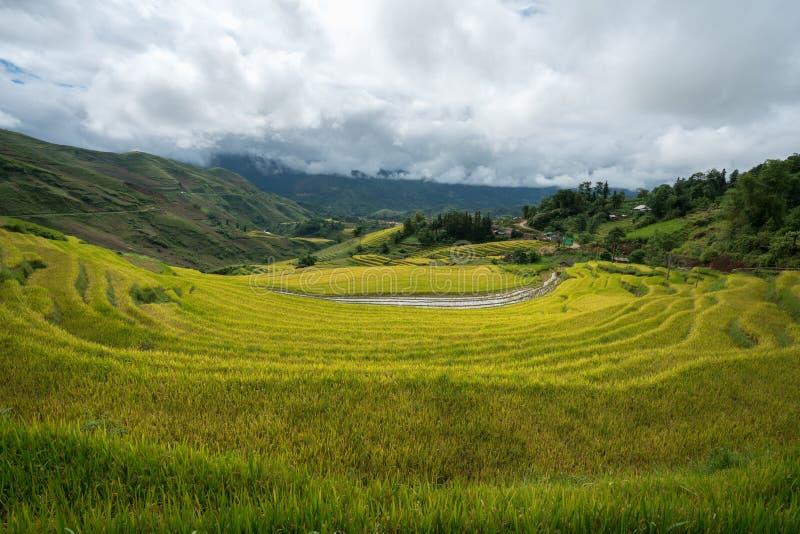 Terrasvormig padieveldlandschap in het oogsten van seizoen in Y Ty, het district van Knuppelxat, Lao Cai, Noord-Vietnam royalty-vrije stock afbeeldingen