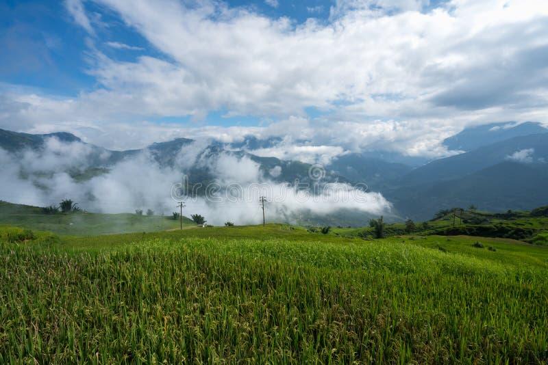 Terrasvormig padieveldlandschap met lage wolken in Y Ty, het district van Knuppelxat, Lao Cai, Noord-Vietnam stock afbeeldingen