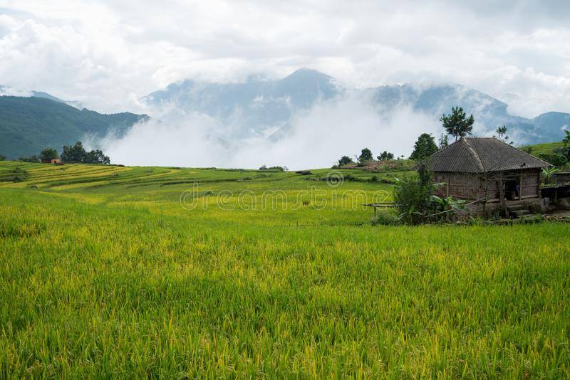 Terrasvormig padieveldlandschap met lage wolken in Y Ty, het district van Knuppelxat, Lao Cai, Noord-Vietnam royalty-vrije stock foto