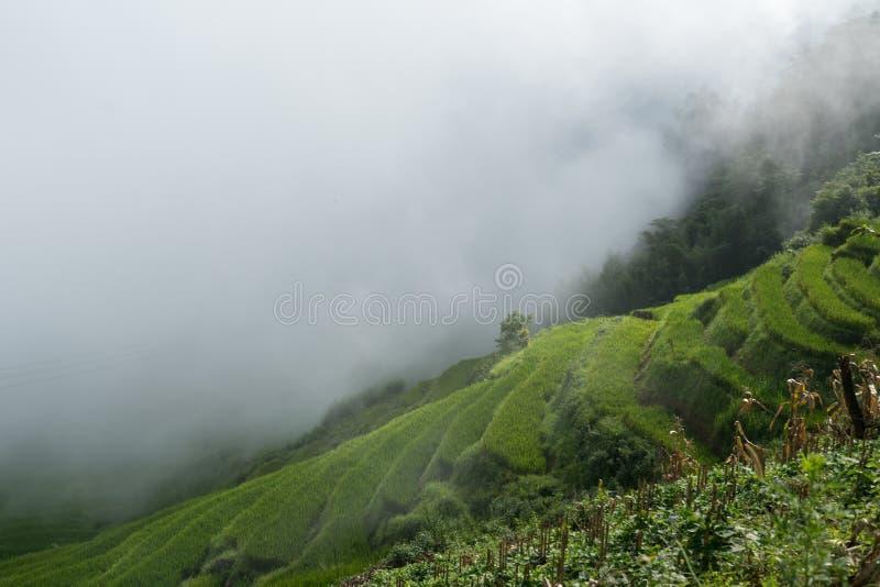 Terrasvormig padieveldlandschap met lage wolken in Y Ty, het district van Knuppelxat, Lao Cai, Noord-Vietnam stock foto's