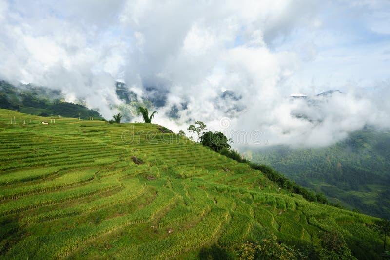 Terrasvormig padieveldlandschap met lage wolken in Y Ty, het district van Knuppelxat, Lao Cai, Noord-Vietnam royalty-vrije stock foto's