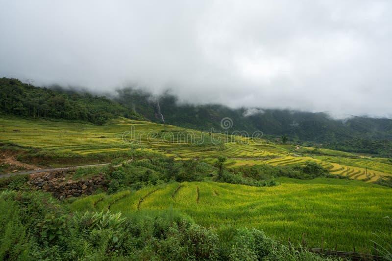 Terrasvormig padieveldlandschap met lage wolken in Y Ty, het district van Knuppelxat, Lao Cai, Noord-Vietnam stock foto