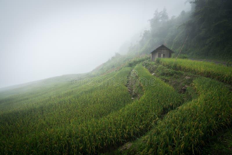 Terrasvormig padieveldlandschap met nevelige wolken van Y Ty, het district van Knuppelxat, Lao Cai, Noord-Vietnam royalty-vrije stock foto