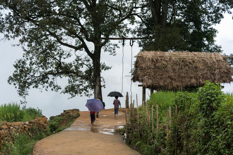 Terrasvormig padieveldlandschap met weg en grote boom van Y Ty, het district van Knuppelxat, Lao Cai, Noord-Vietnam royalty-vrije stock afbeelding