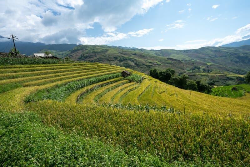 Terrasvormig padieveldlandschap van Y Ty, het district van Knuppelxat, Lao Cai, Noord-Vietnam royalty-vrije stock foto's