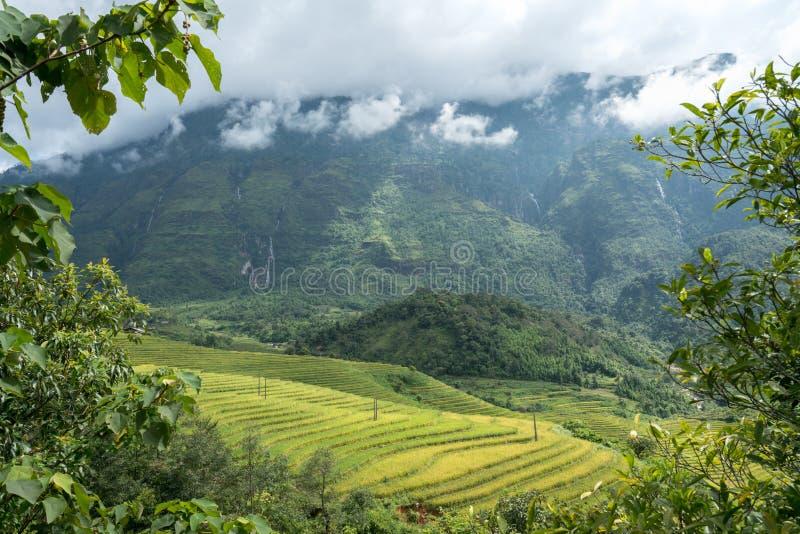 Terrasvormig padieveldlandschap van Y Ty, het district van Knuppelxat, Lao Cai, Noord-Vietnam royalty-vrije stock afbeeldingen