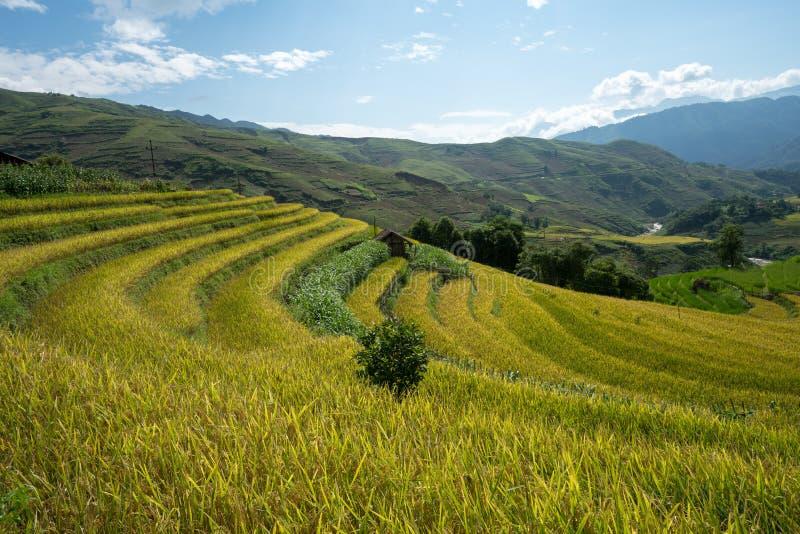 Terrasvormig padieveldlandschap van Y Ty, het district van Knuppelxat, Lao Cai, Noord-Vietnam stock foto