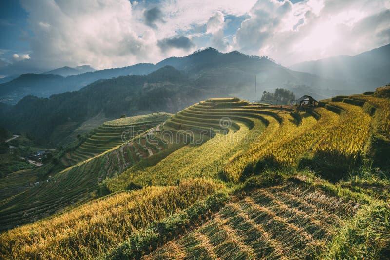 Terrasvormig in Sapa, Vietnam royalty-vrije stock foto's