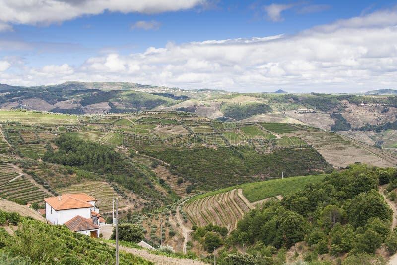 Terrasvormige wijngaarden in Douro-Vallei royalty-vrije stock afbeeldingen