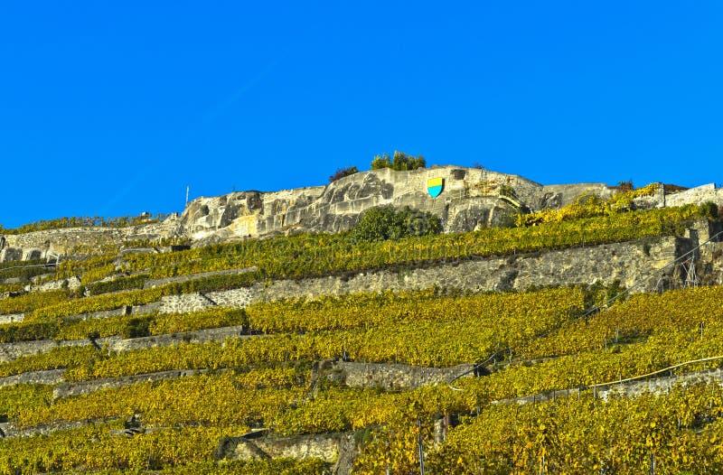 Terraswijngaarden van Rivaz royalty-vrije stock afbeeldingen