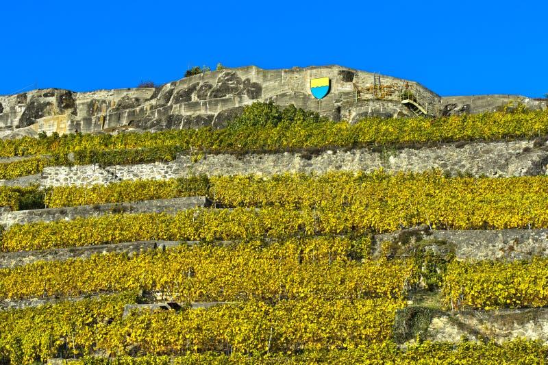 Terraswijngaarden van Rivaz stock foto's