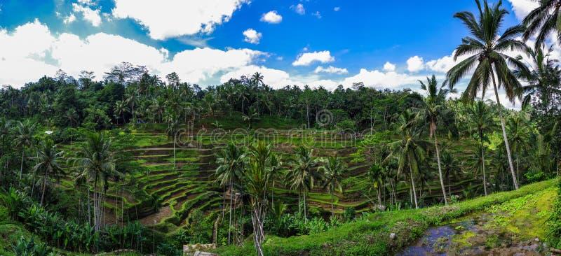 Terraza de Delagoan, Ubud, Bali, Indonesia fotografía de archivo
