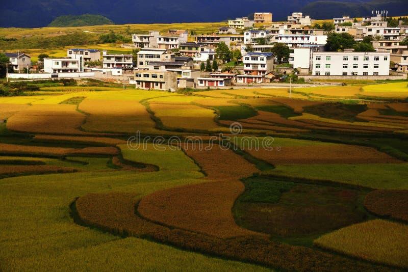 Terraza en China de Guizhou fotos de archivo