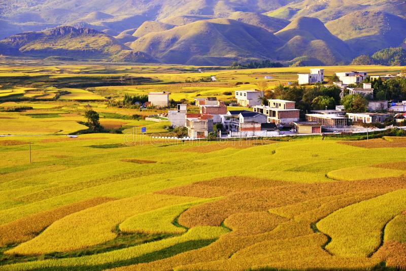 Terraza en China de Guizhou imagen de archivo libre de regalías